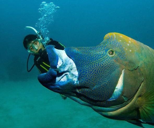130 kiloluk balığa yem oldu... galerisi resim 2