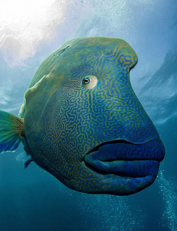 130 kiloluk balığa yem oldu... galerisi resim 5