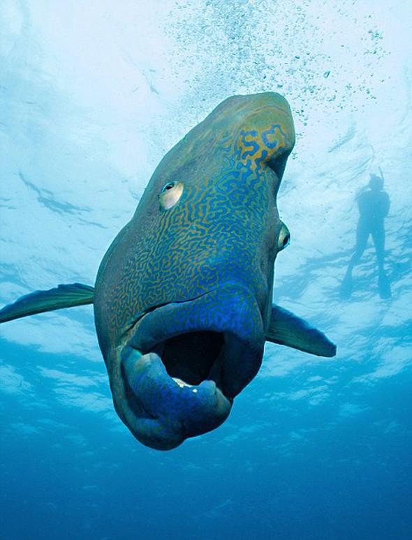 130 kiloluk balığa yem oldu... galerisi resim 8