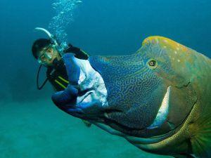 130 kiloluk balığa yem oldu...