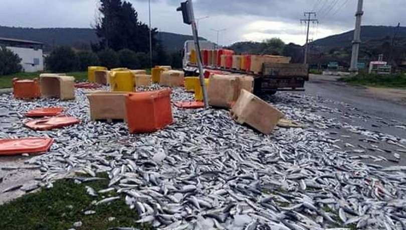 TIR devrildi karayolu, balık yolu oldu