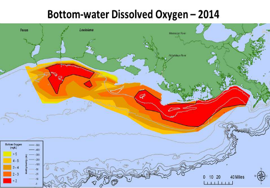 NOAA: Gulf of Mexico Dead Zone Still Significant