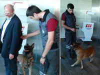 Biz de Avusturyalı yolcuları köpeklerle aradık