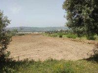 Dilovası'nda kalan son yeşillik alana TIR parkı