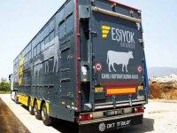 OKT, hayvanları koruyor, müşteriye kazandırıyor