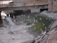 Tekirdağ'da oksijensiz kalan balıklar su yüzüne çıktı