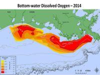NOAA: Gulf of Mexico Dead Zone Still Significant